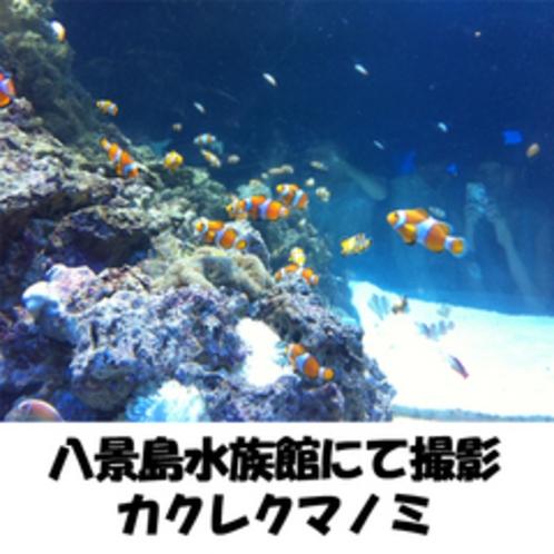八景島水族館にて撮影【カクレクマノミ】