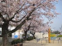 春爛漫の舟入公園