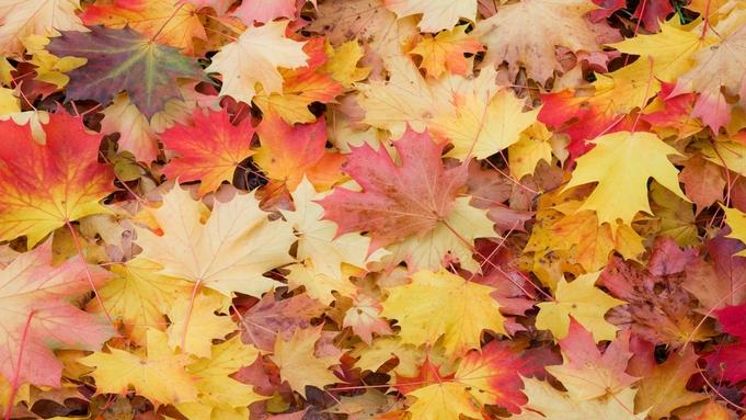 【秋冬旅セール】〈素泊まり〉ポイント10倍でお得♪ 秋冬のカップルやファミリーのご褒美旅行に。