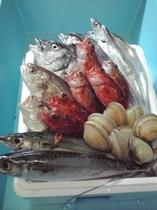 伊良湖で水揚げされた魚