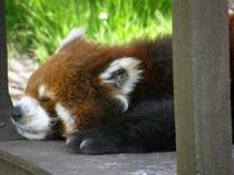 《旭山動物園》