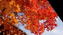 露天風呂や客室から見える紅葉