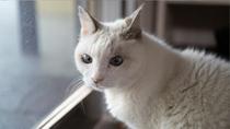 千望荘の看板猫