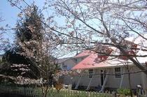 3月後半 ソメイヨシノ開花の裏庭