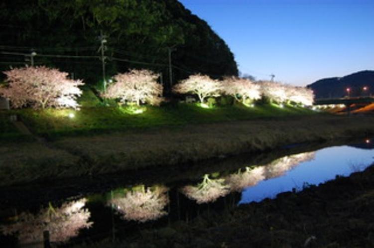 みなみの桜まつりライトアップ