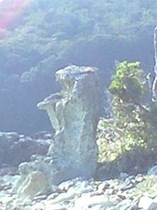 爪木崎のプレーリードッグ