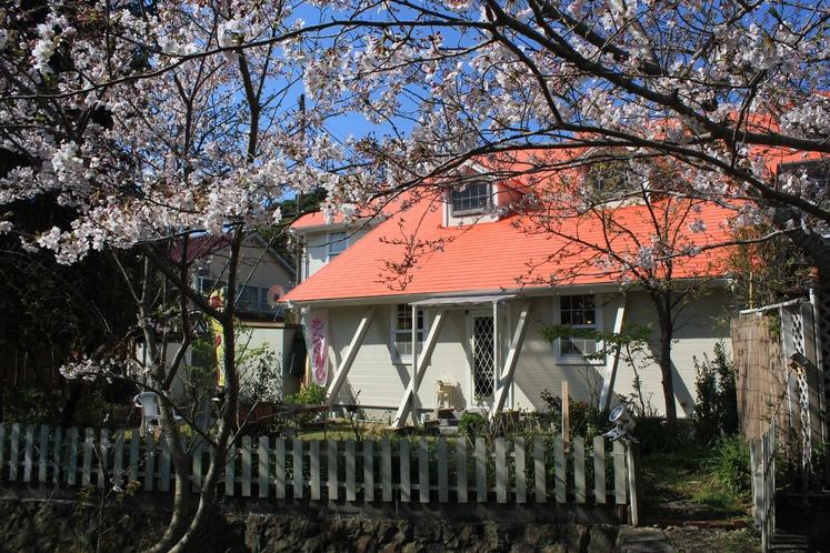 河津桜とソメイヨシノの桜並木がダイニングや裏庭からみられます