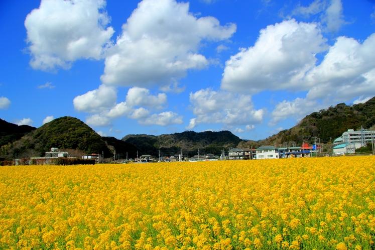 2月から3月末 下賀茂日野(ひんの)菜の花畑