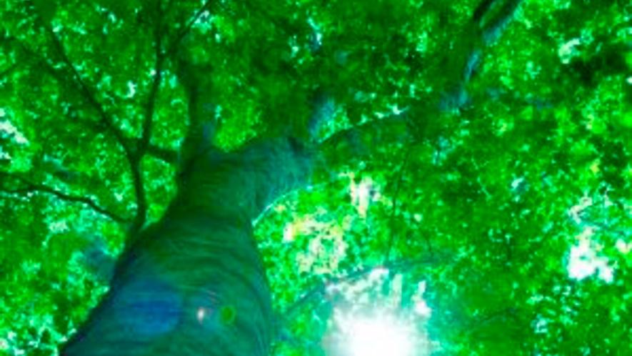 *【周辺】広大なブナの原生林に囲まれた当館で心身ともにリフレッシュ!