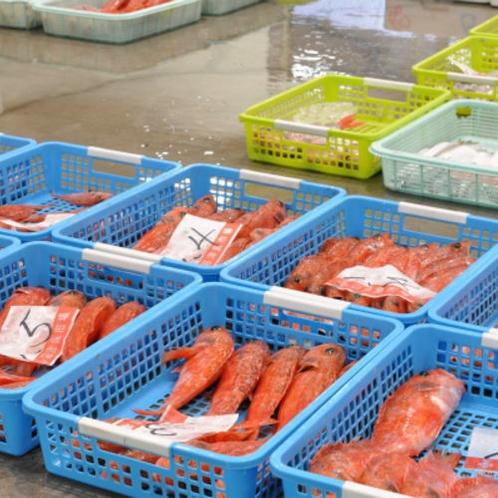沼津魚市場にて。魚の持ち味を最大限に生かす、お腹にもたれないシンプルな地魚フレンチ