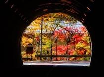 鳩ノ巣トンネルから 2017年11月