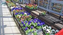【さんさんハウス】色とりどりの季節の花たちがずらりと並びます
