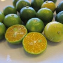 沖縄果実 パッションフルーツ