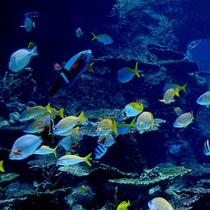 美ら海水族館 【車で約55分】
