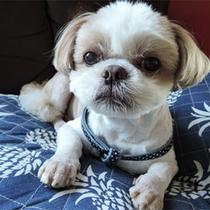 *看板犬ジュッピー/当館の人気スタッフ、ジュッピーちゃんがお出迎え♪