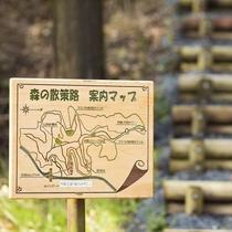 ◆森の散策路