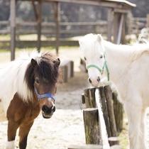 ◆牧舎エリア(馬)