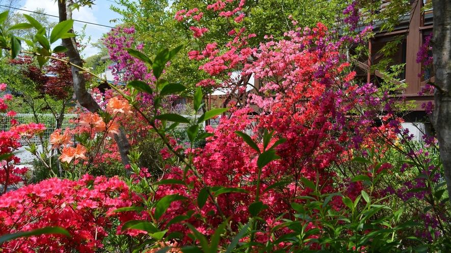庭内の草花