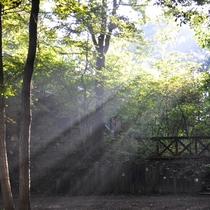 *【自然】都会の生活に疲れた方、自然が大好きな方、ここでは木もれびに癒されます