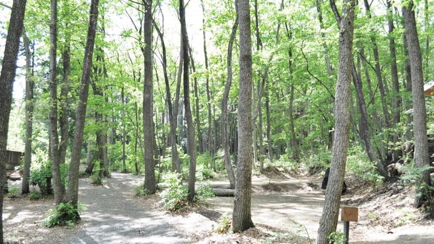 *【キャンプ場】大自然にいるだけで癒されます♪キャンプサイトはペット無料です!
