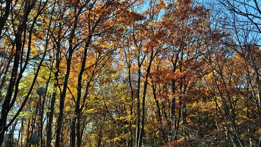 *【自然】秋の晴れた一日。新鮮な空気を吸い込んで、ゆったり流れる時間を楽しめます。