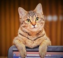うらら♪の看板猫 LaLaちゃん