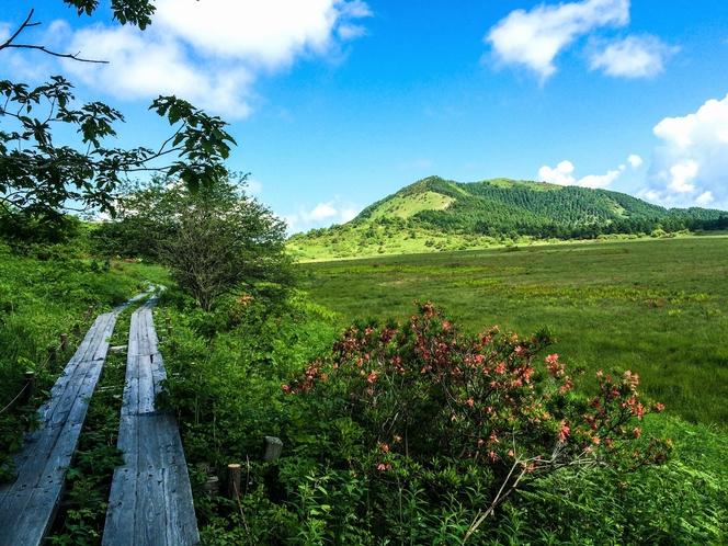 八島湿原から鷲ヶ峰を望む