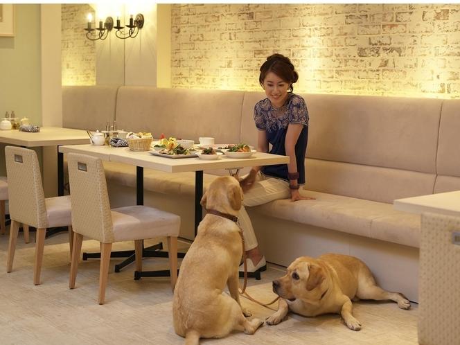 愛犬とレストラン利用