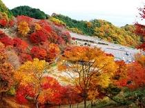 秋の比叡山ドライブウェイ