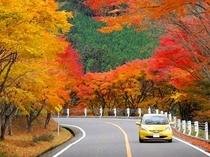 秋の奥比叡ドライブウェイ
