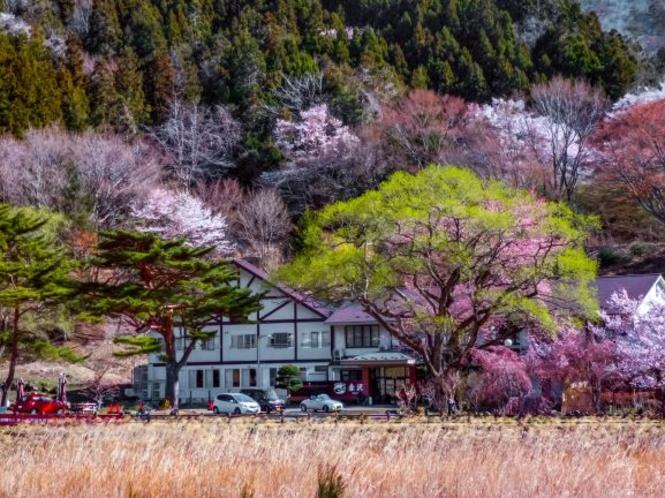 春の赤沢温泉