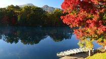 【秋の五色沼】湖の青と色づいた木々の赤のコントラストが美しい。当ホテルから徒歩3分。