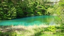 <夏>【五色沼ガイドウォーク】木漏れ日を感じる高原散策。