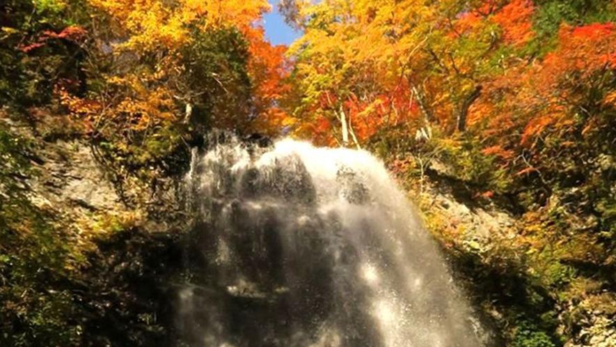 <秋>【秋の小野川不動滝ハイク】広葉樹の美しい色彩とマイナスイオンを存分に楽しめます。