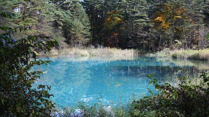 【五色沼】冬の時期も楽しめるスノーシューなどの散策アクティビティをご用意しております。