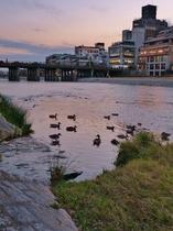 鴨川の初冬