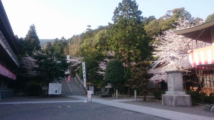 石鎚神社本殿までの参道では桜の時期は綺麗に彩られます。