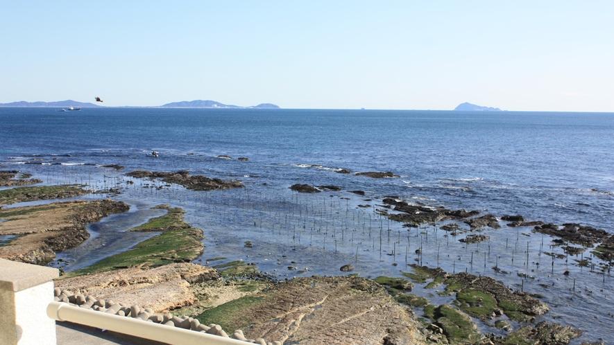 目の前はすぐ海岸、潮のいい日などは、海鳥たちも集まってきます