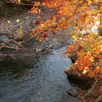【秋の長流川】透明度の高い長流川。晴れた日には太陽が反射して水面がキラキラと揺れます。