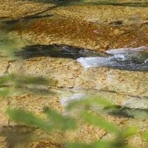 【夏】火山灰が堆積した岩盤のうえを流れる川水。美しい自然の造形美は当館のすぐ目の前に。