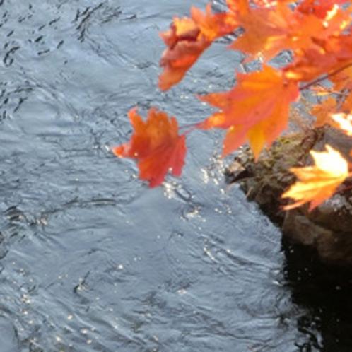 【秋の長流川】紅葉が美しく長流川を彩ります。