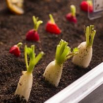 【夕食ブッフェ一例】まるで本当の土に埋まっているかのようなミニチュアの畑野菜。