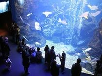 周辺観光:京都水族館