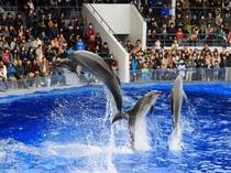 周辺観光:京都水族館イルカ