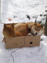 当家の警備犬
