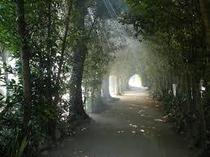 びせ福木並木