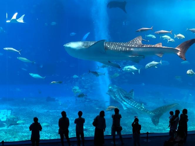 ・美ら海水族館まで車で約15分