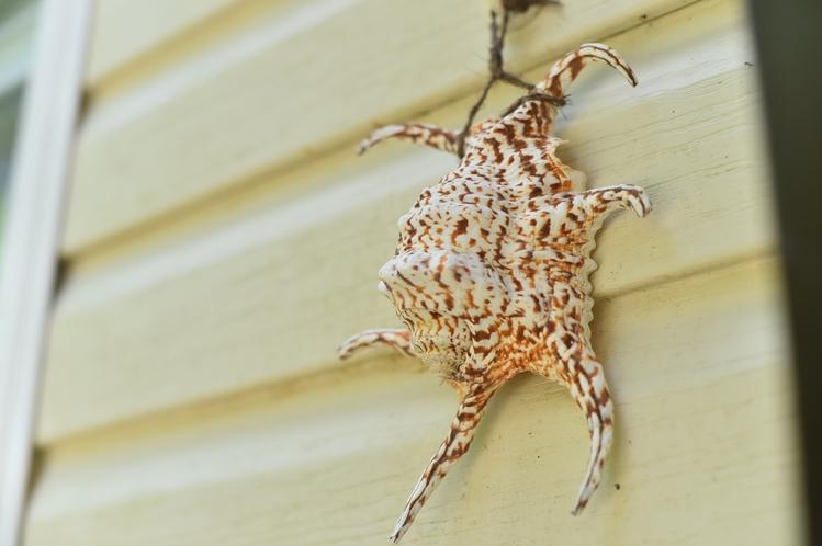 ・ツインスイート:入り口には沖縄らしい貝殻のオブジェがお出迎え♪