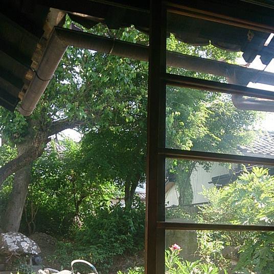 縁側からの眺め