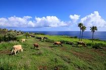 海沿いの広大な敷地でジャージー牛を放牧